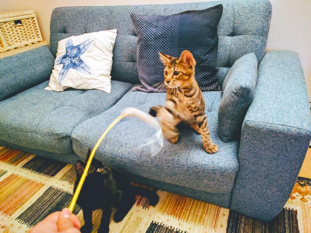 藤沢店猫用おもちゃ