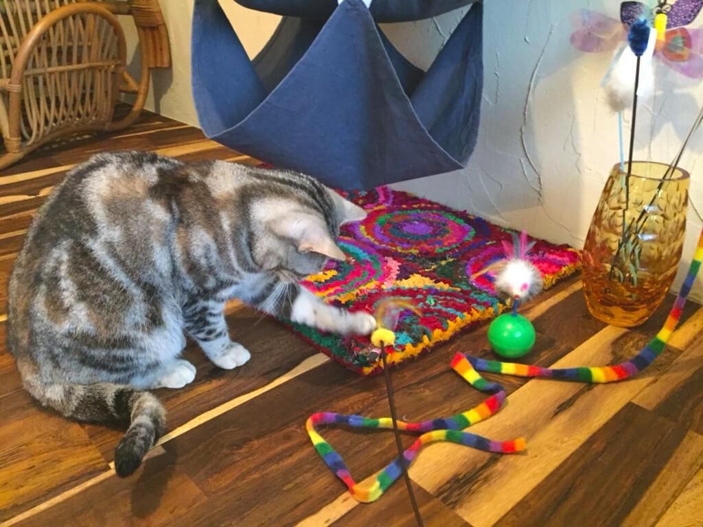 神奈川店猫用おもちゃ