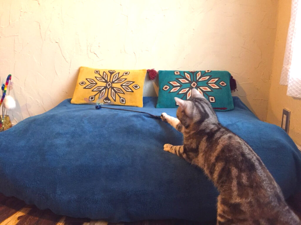 神奈川店猫用ベッド