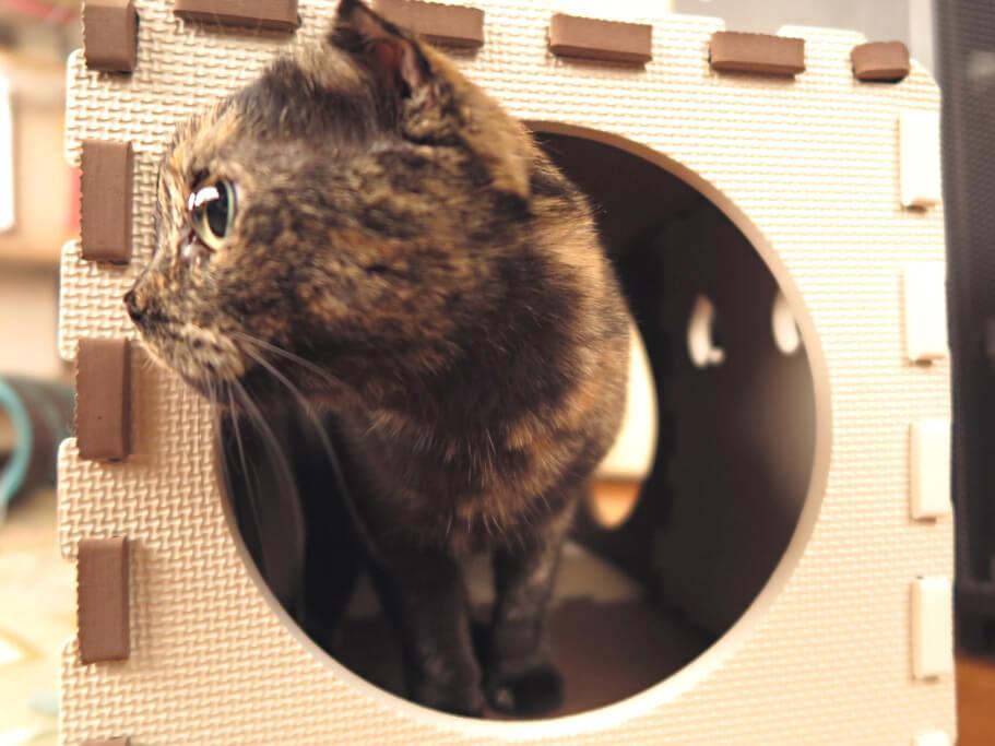 埼玉店猫用ハウス