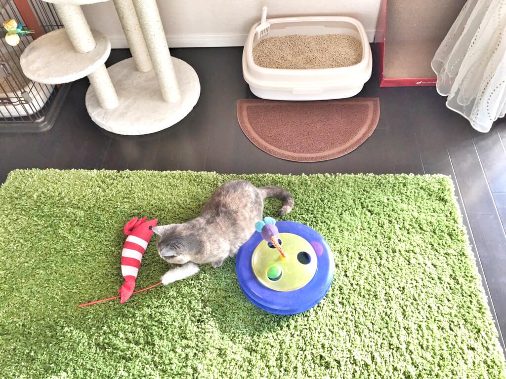 世田谷店猫用おもちゃ