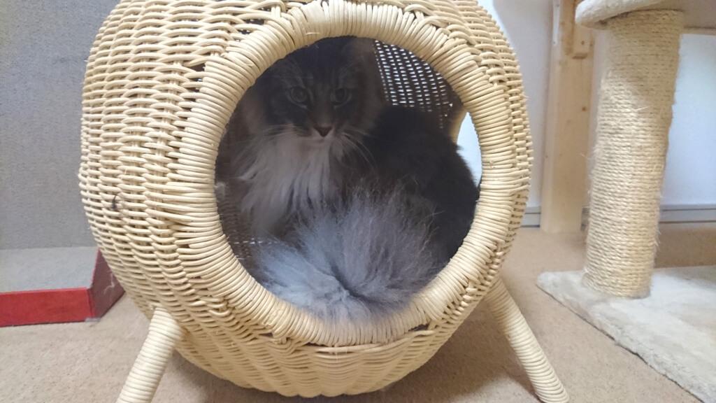 湘南店猫ちぐら