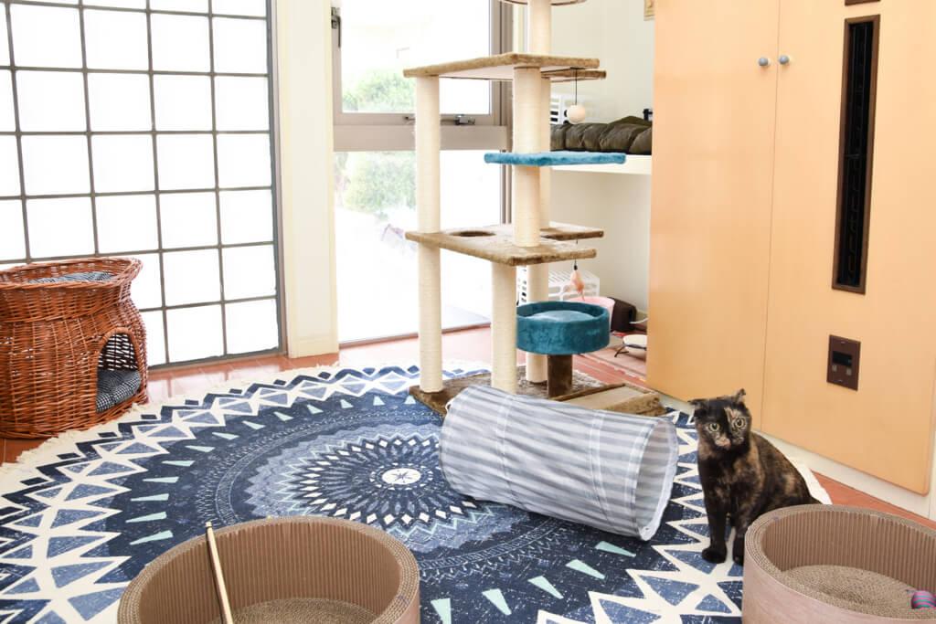 ねこべや東京店室内風景(4畳のお部屋)